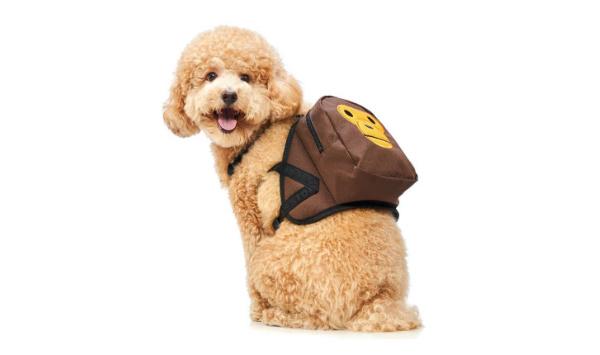 BAPE推出BABY MILO宠物系列单品,潮流风进军宠物界!