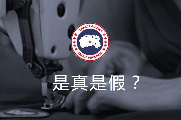 加拿大鹅真假鉴别.jpg